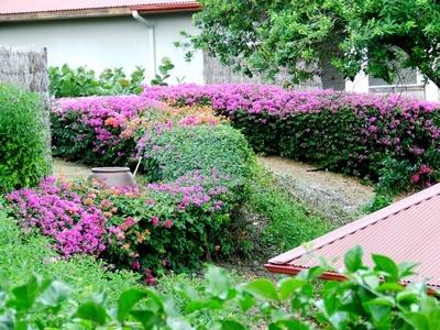 Jencarlos Canela en Martinique