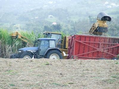 Récolte mécanique de la canne à sucre en Martinique