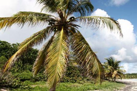 Soldes Martinique