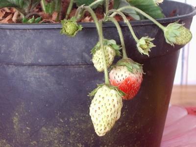 Fruits de Martinique et Fleurs
